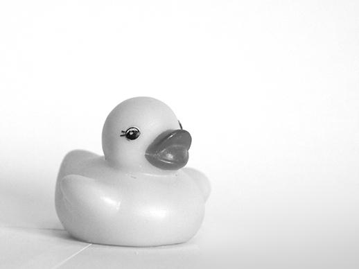 Rubber Duckie - Feb 21, 2011
