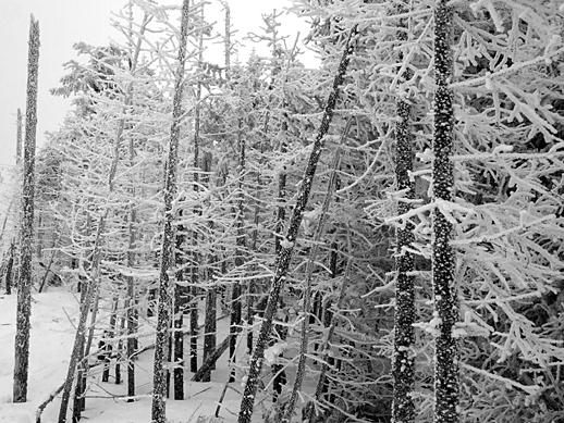 Snow on trees - Feb 28, 2011