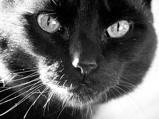 Kitty - Mar 28, 2011