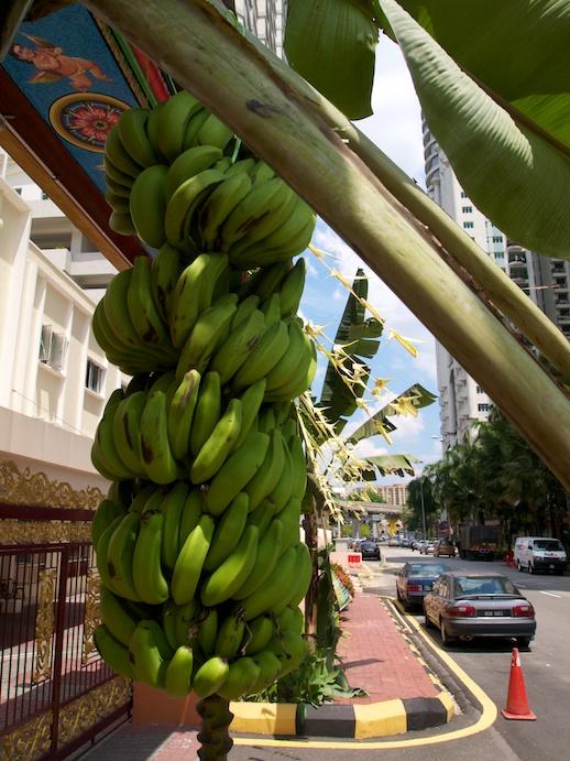 Kuala Lumpur Bananas- July 9, 2011