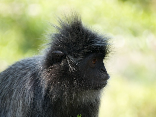 Monkey - July 12, 2011