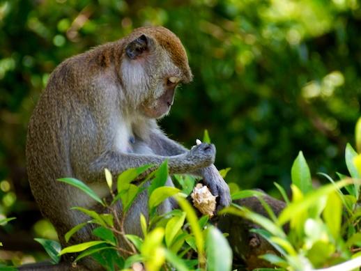 Monkey - July 15, 2011