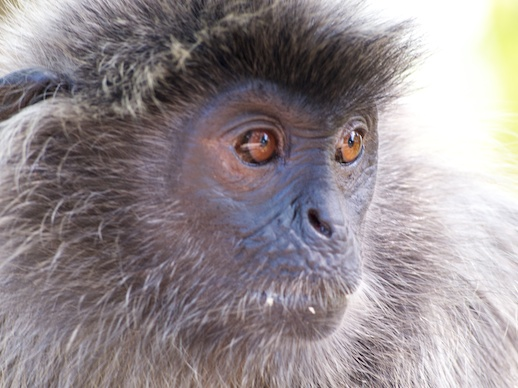 Monkey - July 16, 2011