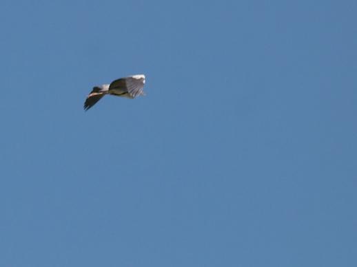 Stork - July 17, 2011