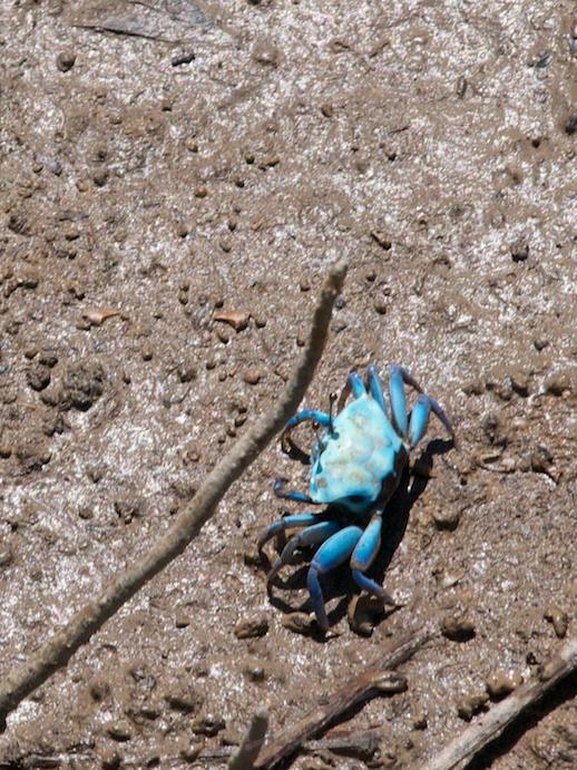 Crab - July 19, 2011