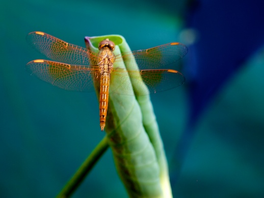 Dragonfly - July 23, 2011