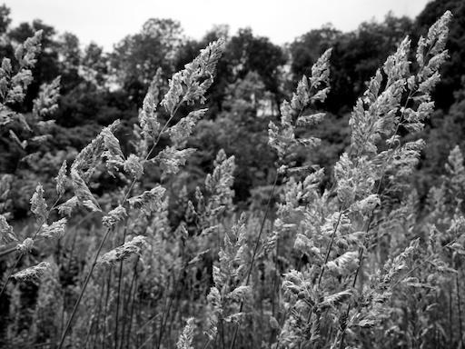 Grass - August 7, 2011