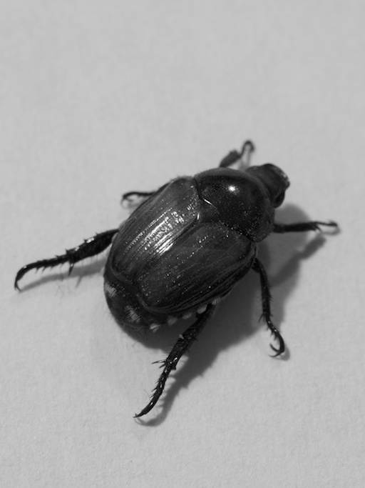 Beetle - August 15, 2011