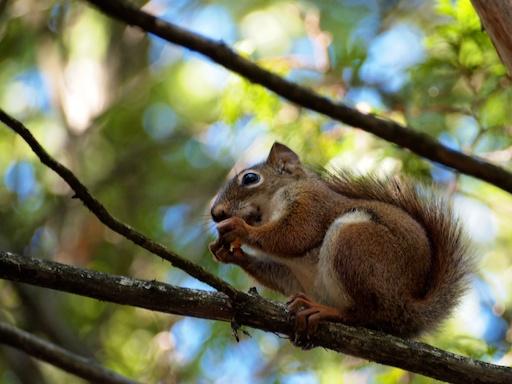 Duke the squirrel - September 1, 2011