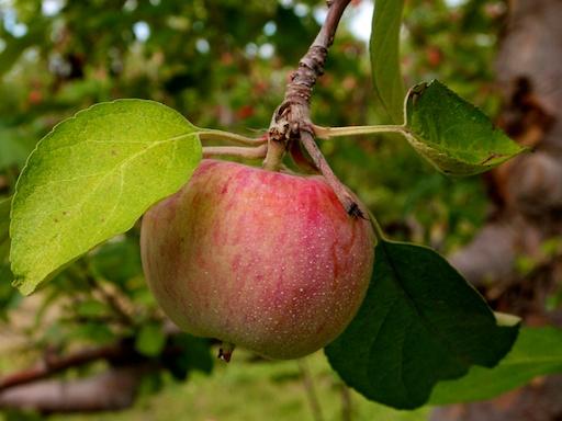 Apple- September 20, 2011
