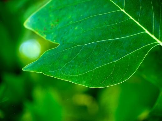 Green Leaf - October 14, 2011
