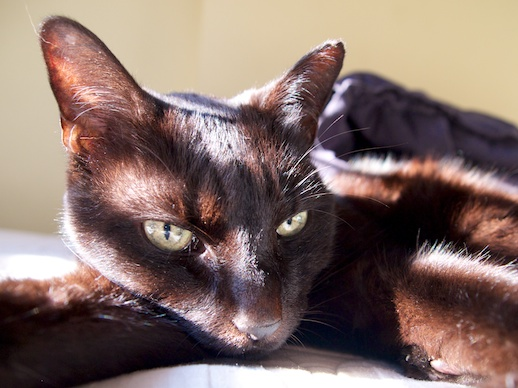 Not-so-black Kitty - October 18, 2011