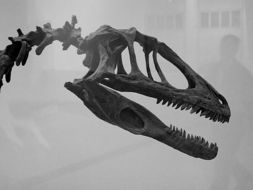 Albertosaurus - November 12, 2011