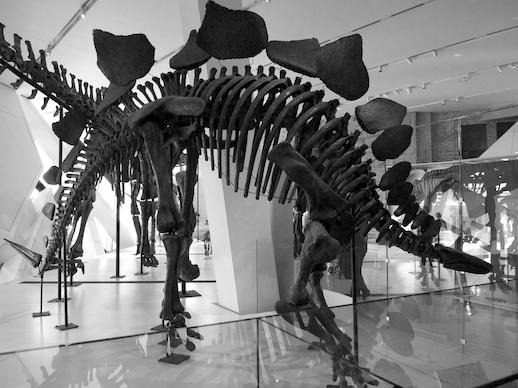 Stegosaurus - November 13, 2011