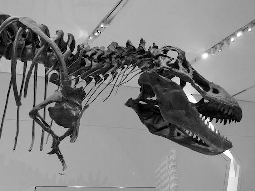 T-Rex - November 14, 2011