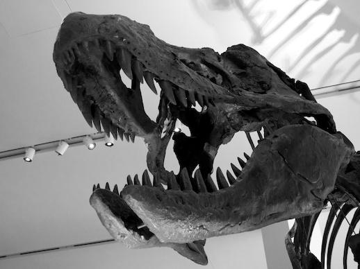 T-rex - November 18, 2011