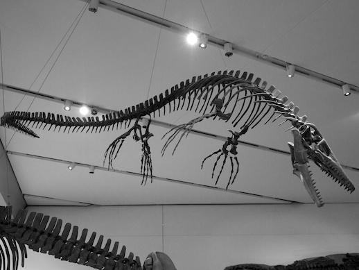 Ichthyosaur - November 19, 2011