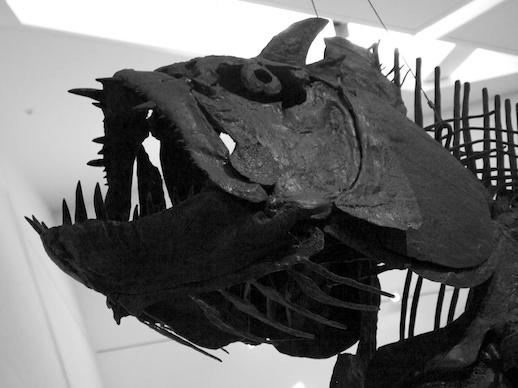 Fossil Fish - November 20, 2011