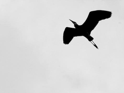 Crane - December 1, 2011