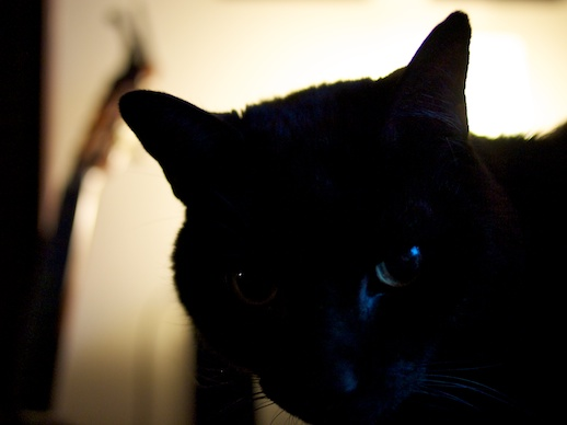 Nonplussed kitty - January 10, 2011